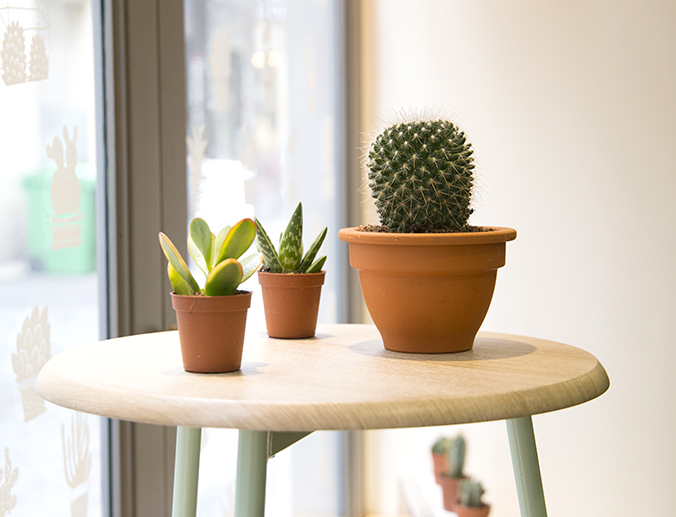 Cactus-boutique