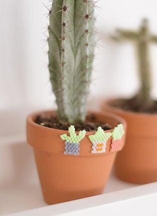 Vignette-cactus-miyuki