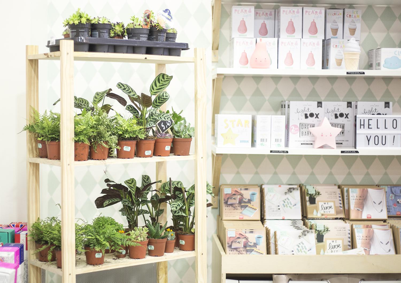 plantes en boutique