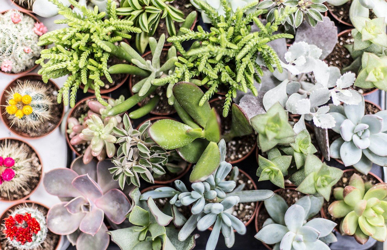 Jolies plantes et succulentes