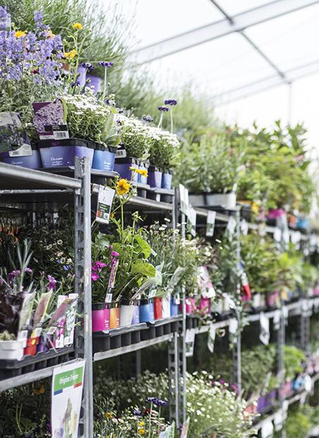 plantes à Rungis