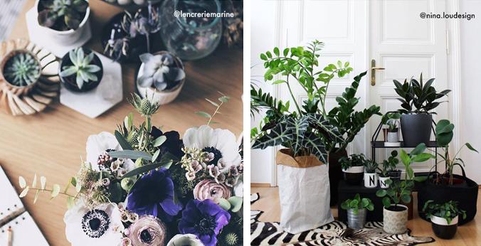 Instagram-plantes-deco-style