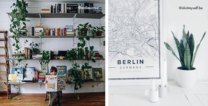 Instagram-plantes-deco-style2