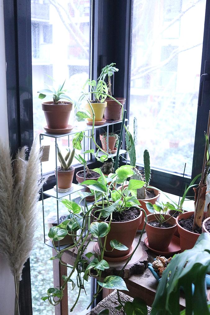 Coin-plantes
